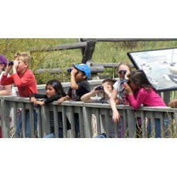 Bird Watching in the United States