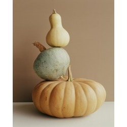 Canvas on Demand Poster Print 16 x 20 entitled A pumpkin and two gourds