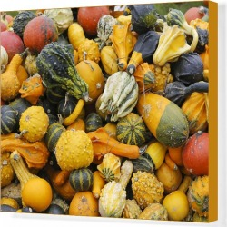 Canvas Print. Different types of squash on a pile, Bergisches Land, North Rhine-Westphalia, Germany