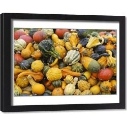 Framed Print. Different types of squash on a pile, Bergisches Land, North Rhine-Westphalia, Germany