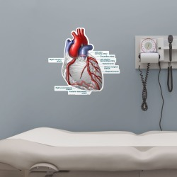 """Heart and Coronary Arteries - Body Part Chart Removable Wall Graphic 25.0""""W x 23.0""""H by Fathead 