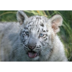 Jigsaw Puzzle. A three-month-old Bengal white tiger cub is seen inside its enclosure at the Buenos