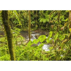 Jigsaw Puzzle. Central America, Costa Rica. Monteve Verde, La Paz River, rain forest Credit as