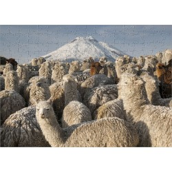 Jigsaw Puzzle. Cotopaxi Volcano (5897 meters) & Alpacas (Lama pacos) Highest active volcano in the world