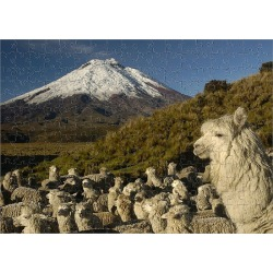 Jigsaw Puzzle. Cotopaxi Volcano (5897 meters) and herd of Alpacas (Lama pacos) Highest active volcano in the world