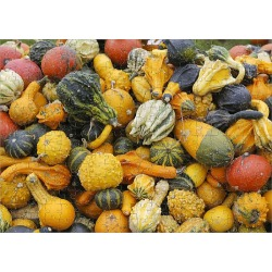 Jigsaw Puzzle. Different types of squash on a pile, Bergisches Land, North Rhine-Westphalia, Germany