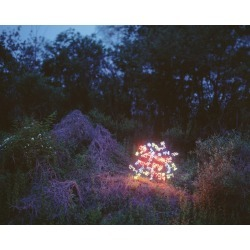 Jung Lee, Sanyuhwa (The Poem �Flowers on the Hills� by Kim Sowol) � Jung Lee, Neon, Light, 2012