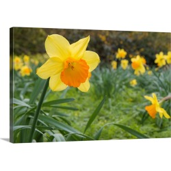 Large Solid-Faced Canvas Print Wall Art Print 30 x 20 entitled Focusing On Spring