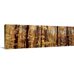 Large Solid-Faced Canvas Print Wall Art Print 48 x 16 entitled Trees in a forest, Alleghany State Park, New York State