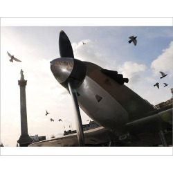 Photograph. Battle of Britain leader statue urged