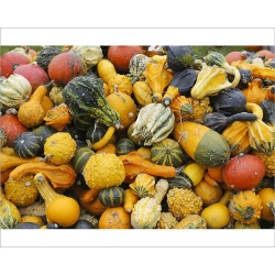 Photograph. Different types of squash on a pile, Bergisches Land, North Rhine-Westphalia, Germany