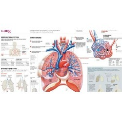 Poster: LUNG, 24x12in.