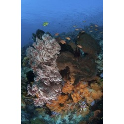 Poster: Stocktrek Images' A Colorful, Healthy Coral Reef Thrives in In