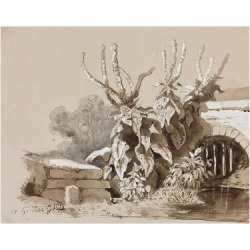 Giclee Print: Study of Plants by a Ditch, with Additions by an Instructor, 1856 by Prince Gaetano Maria Federico di Borbone: 24x18in